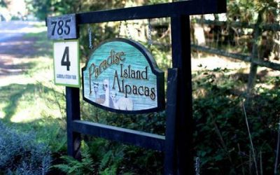 Paradise Island Alpaca Farm